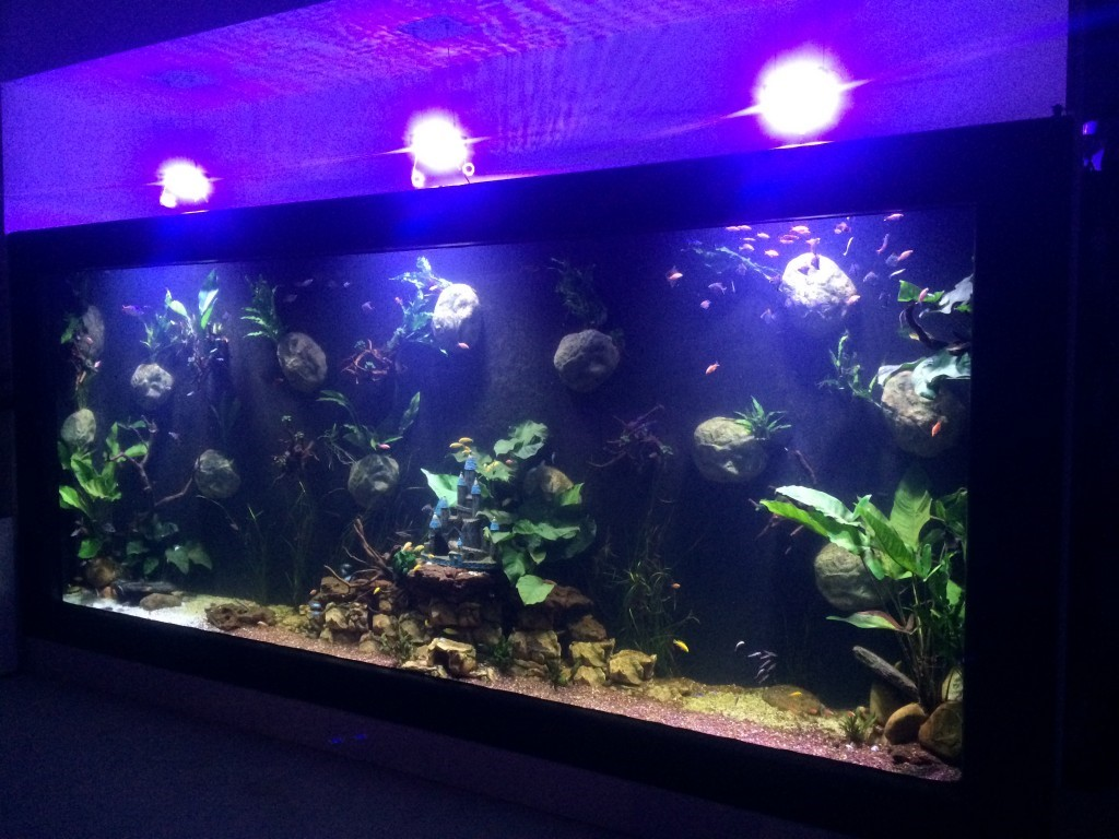 Fibreglass Fish Tank 10,000 Litre Aquarium Custom